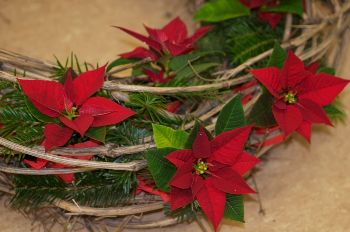 Poinsettia-Wreath3@GardenAcademy.eu