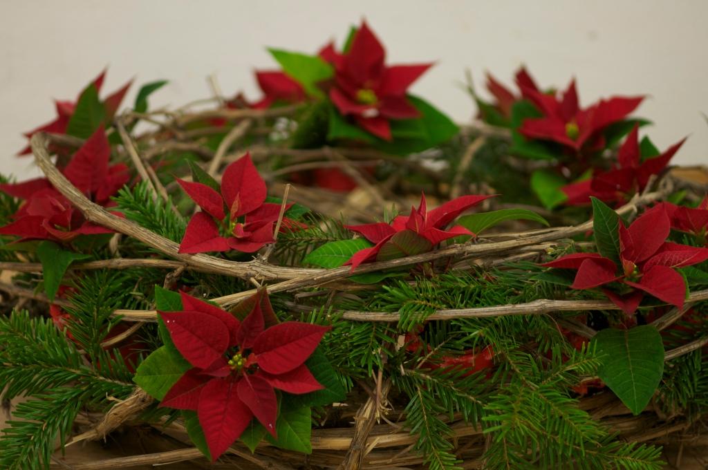 Poinsettia-Wreath2@GardenAcademy.eu